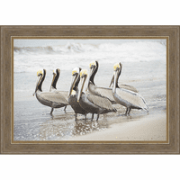 Six Shorebirds Framed Canvas