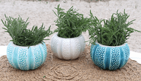 Small Urchin Planters - Set of 3