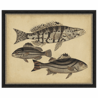 Species of Fish I Framed Print
