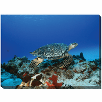 Swimming Sea Turtle Canvas Art