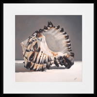 Tiger Shell Framed Print - 20 x 20