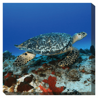Turtle III Indoor/Outdoor Canvas Art
