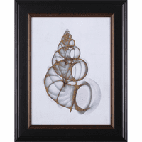 Wentletrap Shell Framed Print