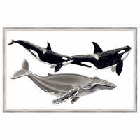 Whale Display III Framed Print