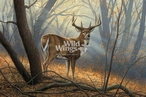 In His Prime Whitetail Deer Conservation Limited Edition Art Print