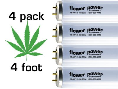 4 Pack Flower Power bulbs, 4ft
