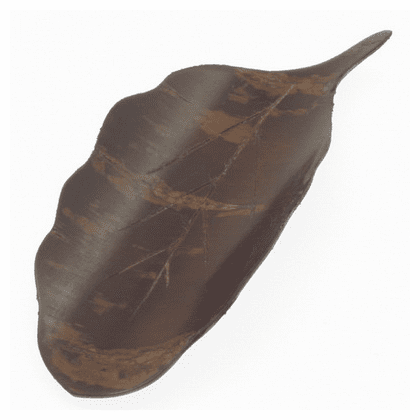 Cherry Bark Leaf Tea Scoop