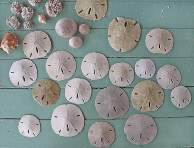 Seashell Decor
