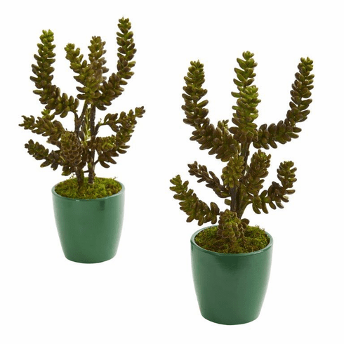 "11"" Succulent Artificial Plant in Green Pot (Set of 2)"