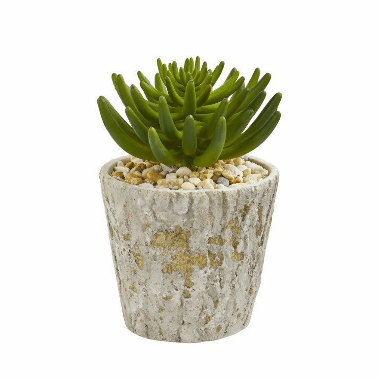 11� Succulent Artificial Plant in Weathered Oak Planter