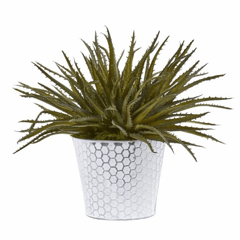 13� Aloe Artificial Plant in White Embossed Planter