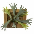 13� Staghorn Artificial Plant in Wood Hanging Frame