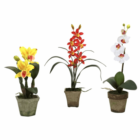 """14.5"""" Potted Orchid Mix (Set of 3)"""