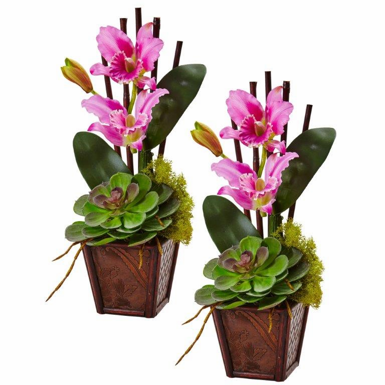 "14.75"" Cattleya Orchid and Succulent Arrangement (Set of 2) - Purple"