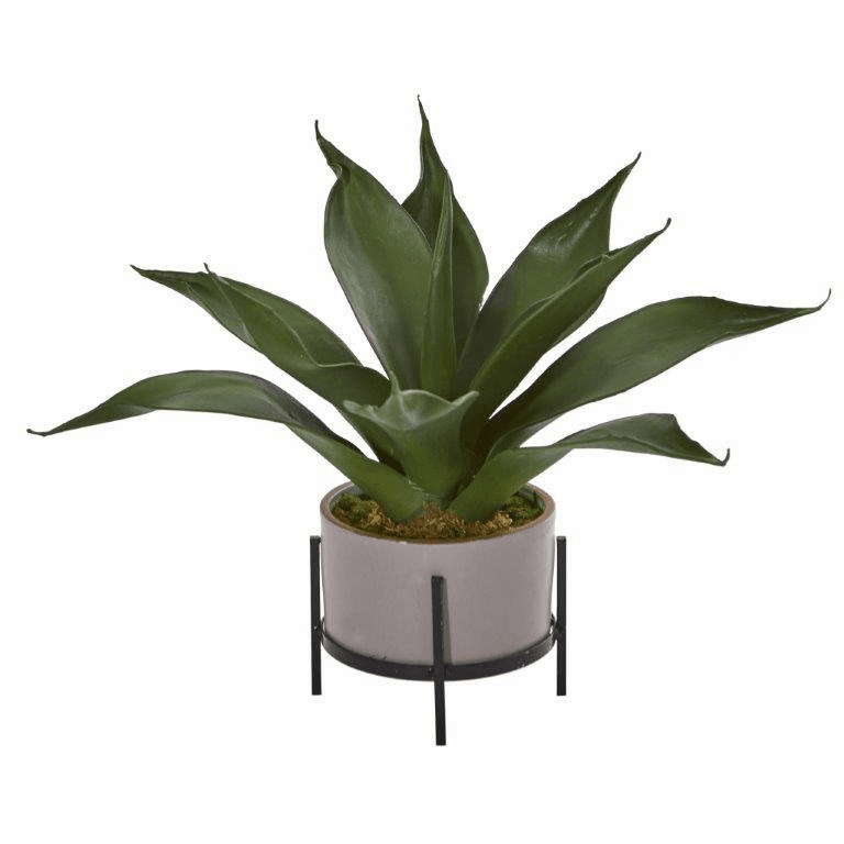 14� Agave Succulent in Decorative Planter