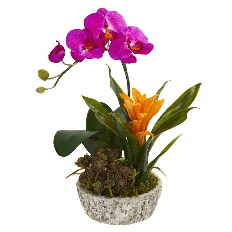 "14"" Orchid, Bromeliad and Succulent Artificial Arrangement in Planter - Beauty"