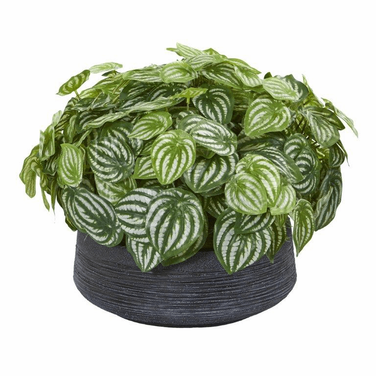 14� Watermelon Peperomia Artificial Plant in Decorative Bowl (Real Touch)