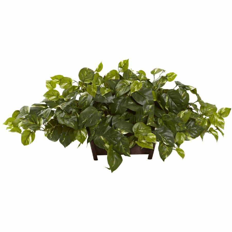 "16"" Pothos with Rectangle Decorative Planter"