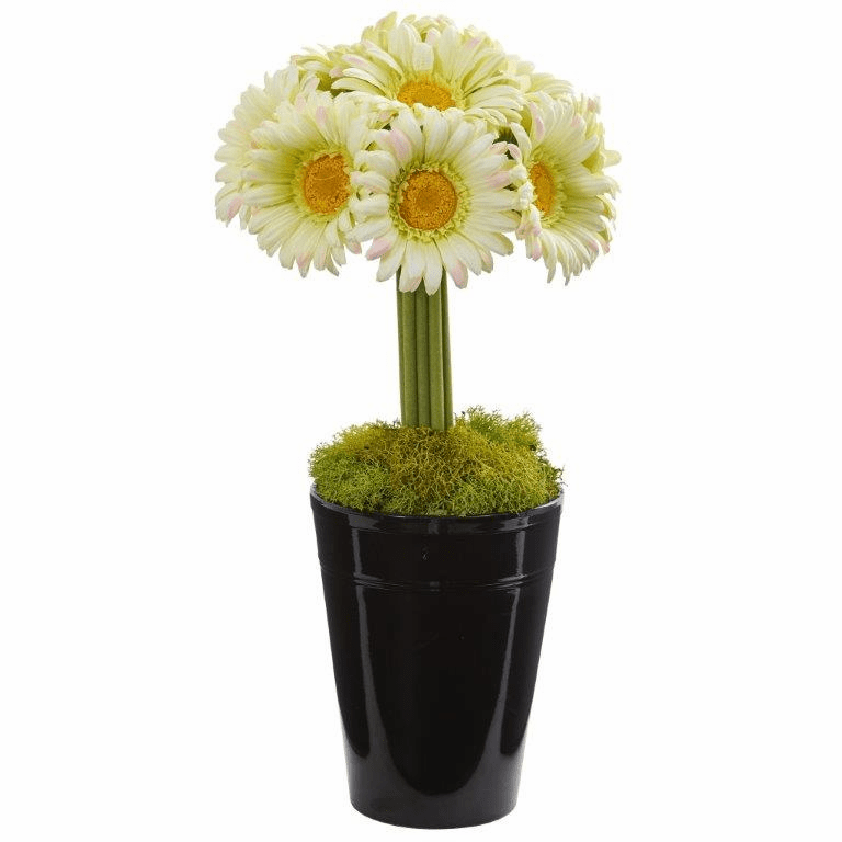 "17"" Gerber Daisy Artificial Arrangement in Black Vase - Cream"