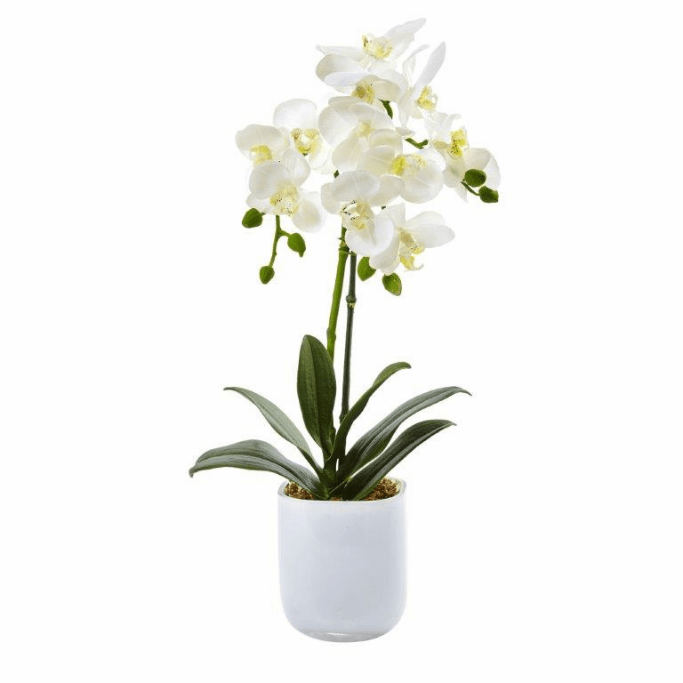 "18.5"" Silk Phalaenopsis Flower Arrangement in Frosted Glass"