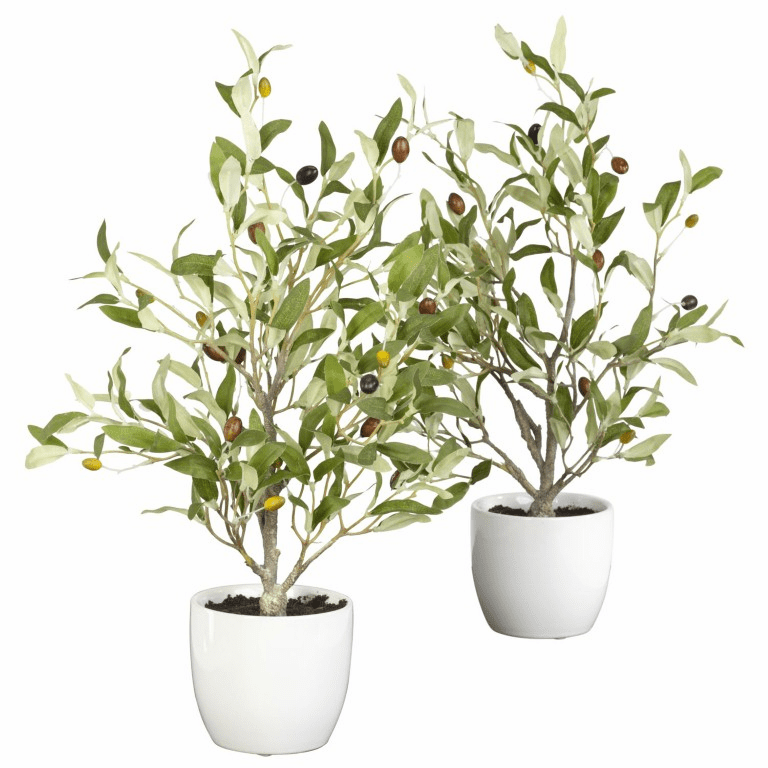 "18"" Olive Silk Tree with Vase (Set of 2)"
