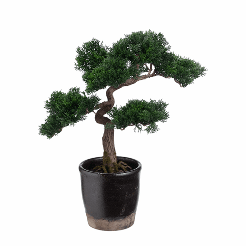 "19"" Tall Cedar Artificial Bonsai Tree in Terra Cotta Pot"