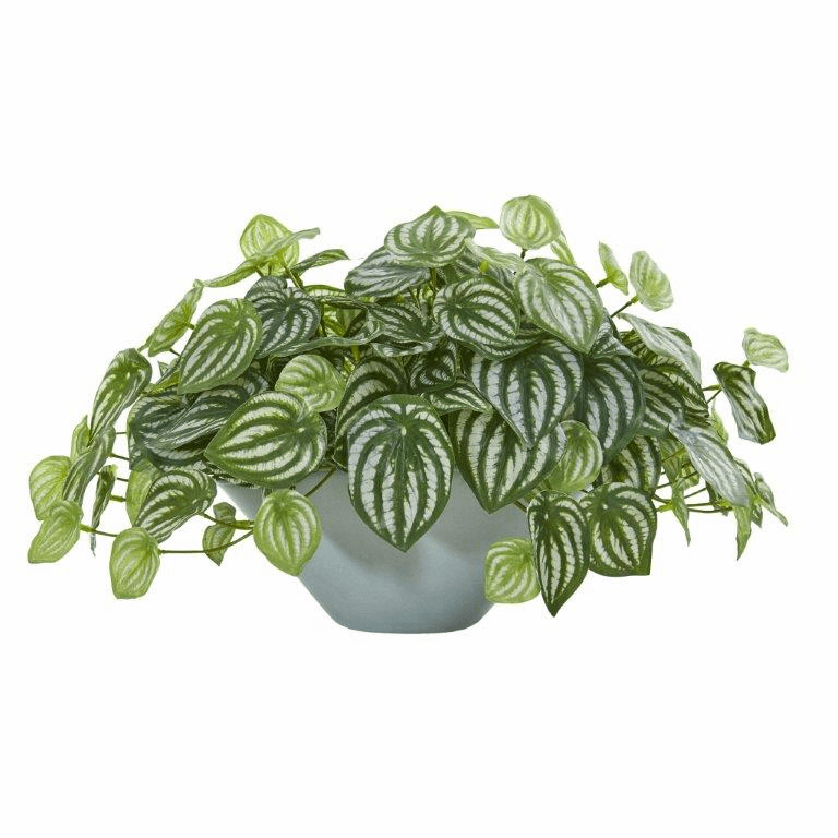 19� Watermelon Peperomia Artificial Plant in Green Vase (Real Touch)