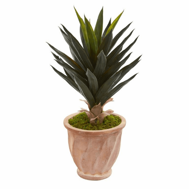 2' Agave Artificial Plant in Terra Cotta Planter