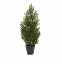 2� Mini Cedar Pine Tree (Indoor/Outdoor)