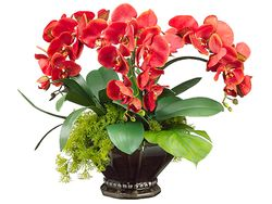 """20"""" Artificial Phalaenopsis Orchid Flowers with Moss and Orchid Leaf in Decorative Scallop Bowl"""