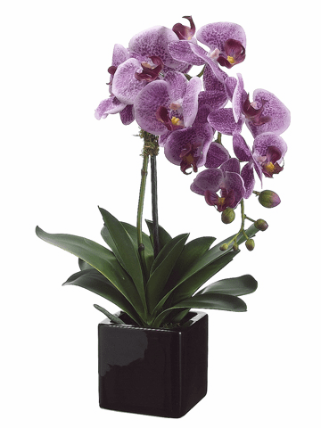 "20"" Artificial Phalaenopsis Orchid Plant Arrangement in Ceramic Pot - Set of 4"