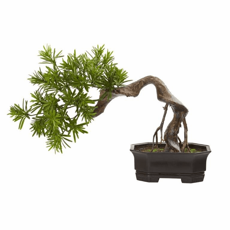 20� Bonsai Styled Podocarpus Artificial Plant