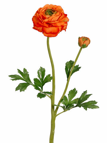 "20"" Silk Ranunculus Spray with Bud & Water-Resistant Stem - Set of 12 (Shown in Green)"