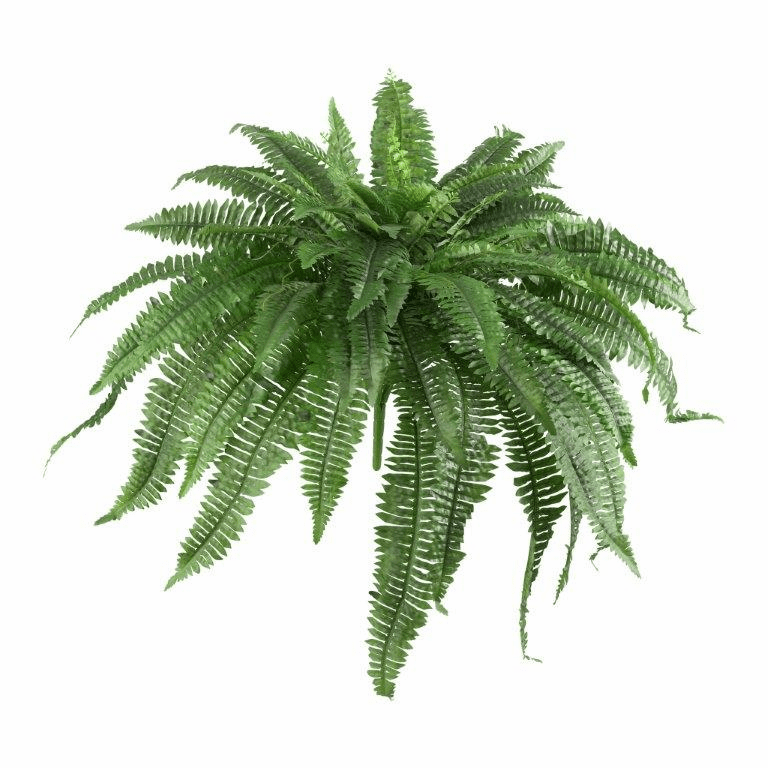 "21"" Artificial Boston Fern Bush (Set of 2) - Non Potted"