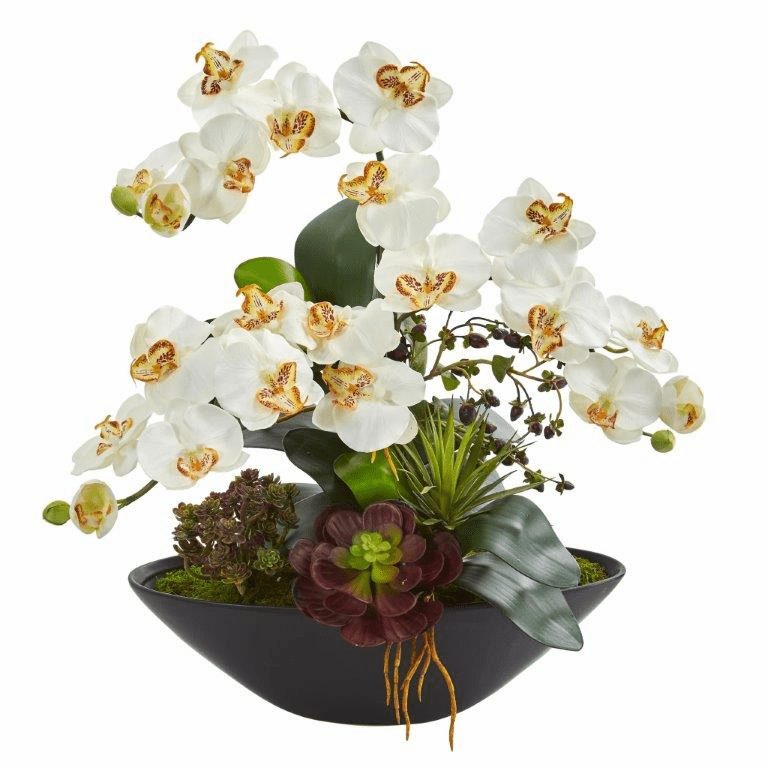 "21"" Phalaenopsis Orchid Flower and Mixed Succulent Garden Artificial Arrangement in Black Vase - Cream"