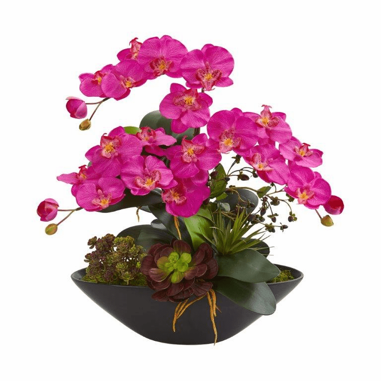 "21"" Phalaenopsis Orchid Flower and Mixed Succulent Garden Artificial Arrangement in Black Vase - Dark Pink"
