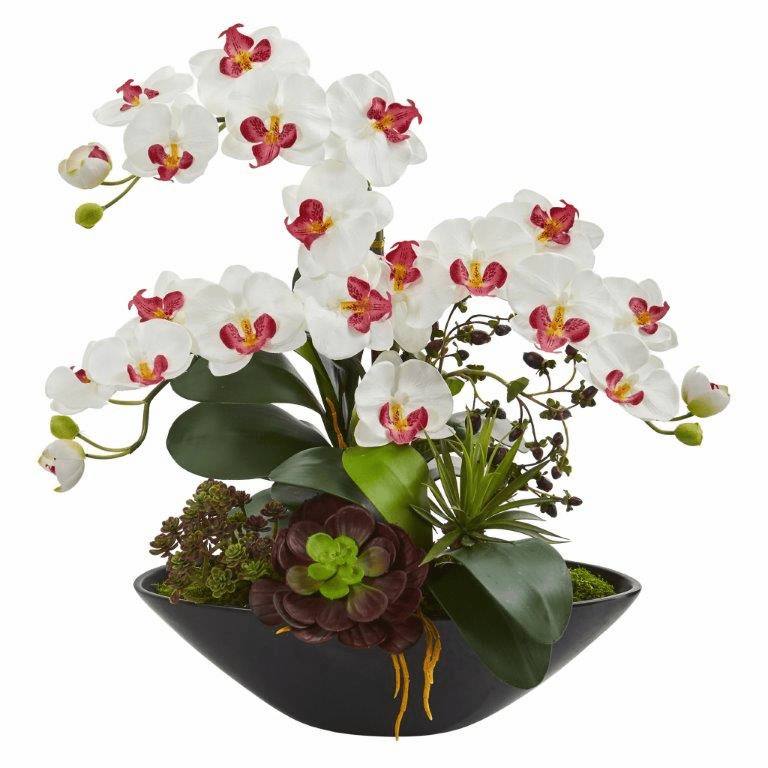 "21"" Phalaenopsis Orchid Flower and Mixed Succulent Garden Artificial Arrangement in Black Vase - White"