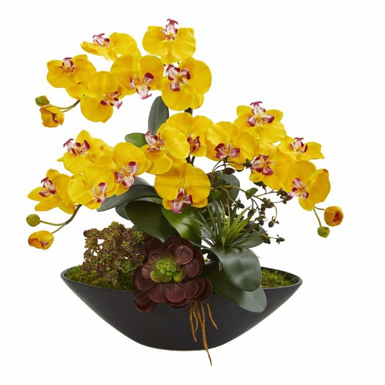 "21"" Phalaenopsis Orchid Flower and Mixed Succulent Garden Artificial Arrangement in Black Vase - Yellow"