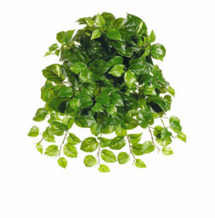 "21"" Puff Pothos Hanging Silk Artificial Plant - Non Potted-Set of 12"