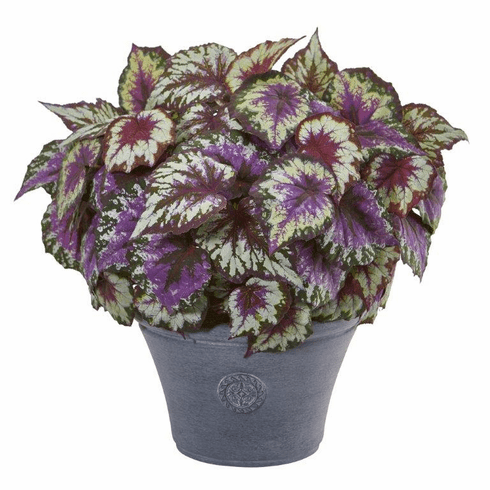 """22"""" Begonia Artificial Plant in Gray Planter"""