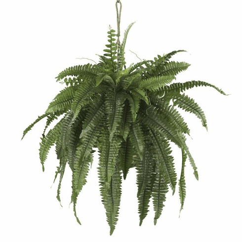"22"" Large Boston Fern Hanging Basket"