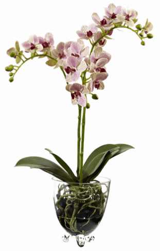 "22"" Raspberry Orchid Elegance Arrangement"