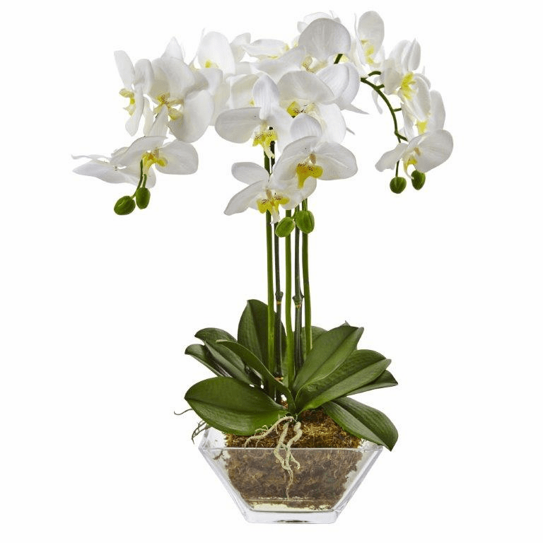 "22"" Silk Phalaenopsis Orchid Flower Triple Stem in Glass Vase"