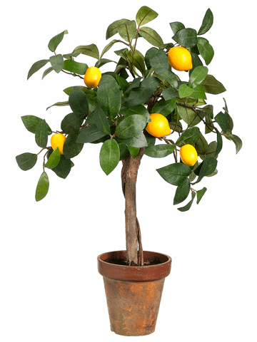 """22"""" Young Artificial Lemon Topiary in Paper Mache - Set of 4"""