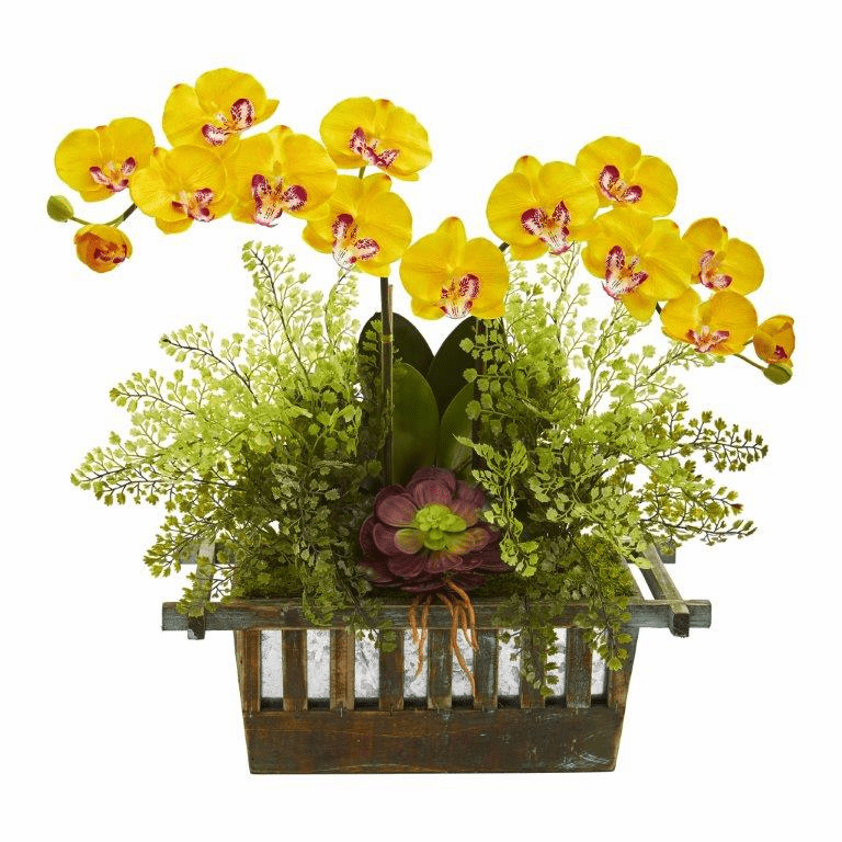 "23"" Orchid, Succulent and Maiden Hair Artificial Arrangement  - Yellow"