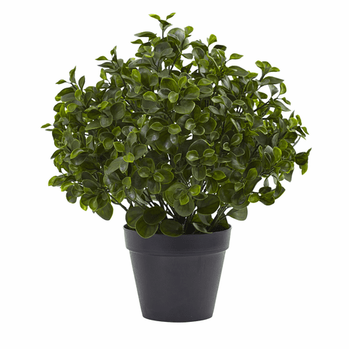 "23"" Peperomia Plant UV Resistant (Indoor/Outdoor)"