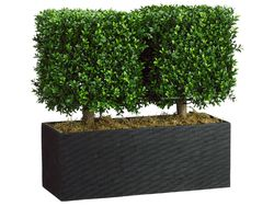 """24"""" Artificial Boxwood Topiary Plant in Rectangular Bamboo Container"""