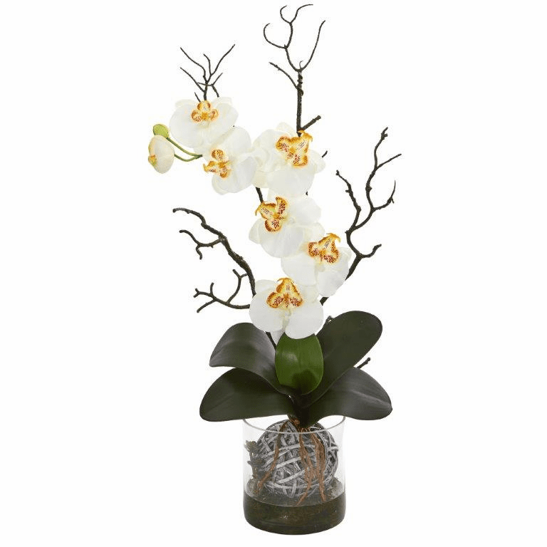 "24"" Phalaenopsis Orchid Artificial Arrangement in Vase - Cream"