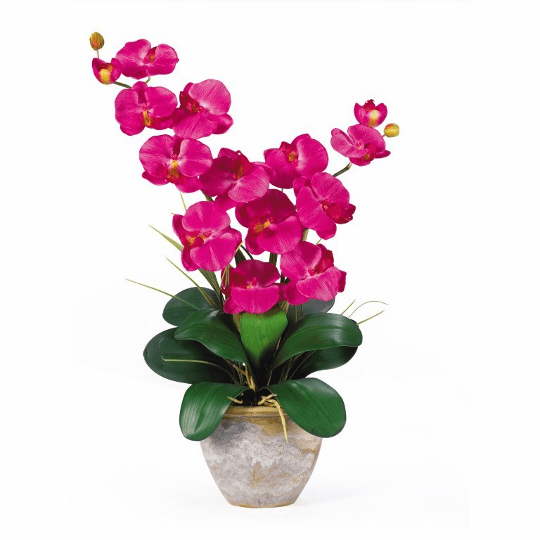 "25"" Double Stem Phalaenopsis Silk Orchid Arrangement"