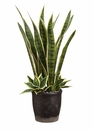 """25"""" Mother-In-Law Tongue and Agave Artificial Plant Arrangement in Pot Green"""